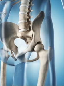 anatomie hanche